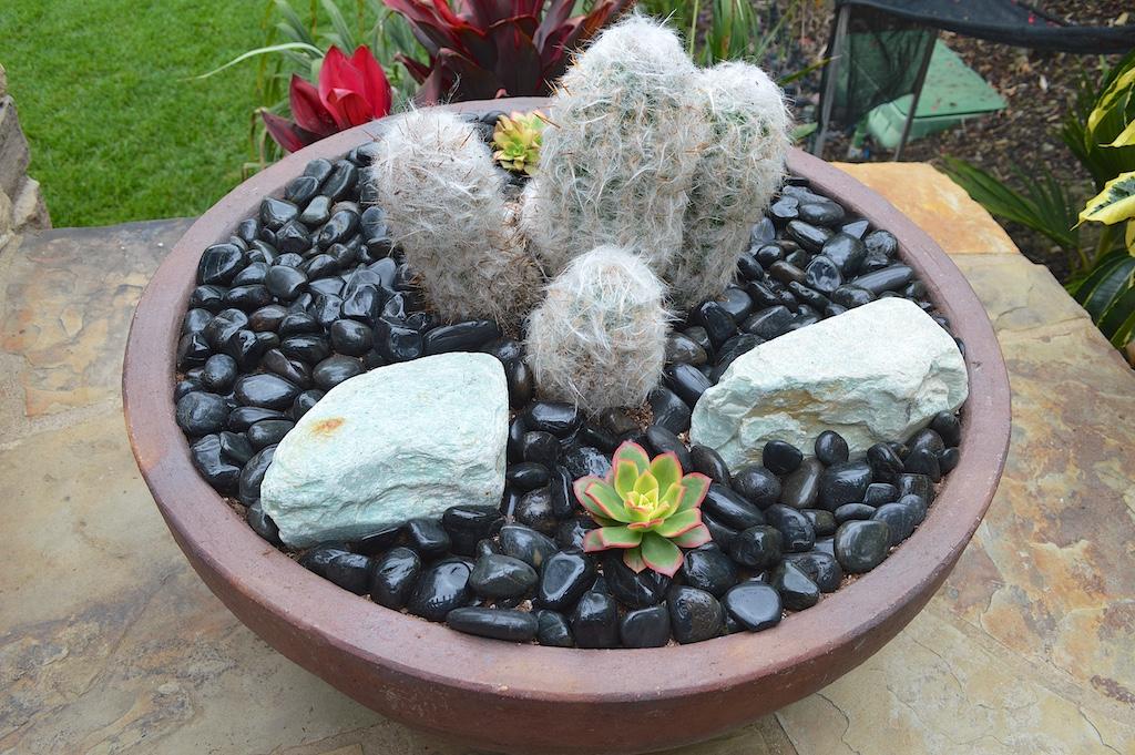 Succulent Pot Creation Step 9