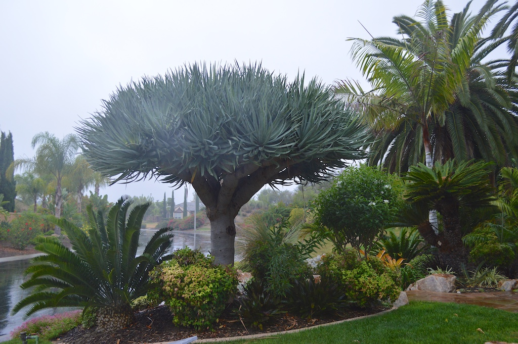 El Nino Rain Garden