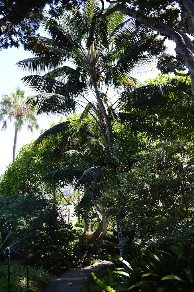 Self Realization Fellowship Meditation Gardens Howea forsteriana