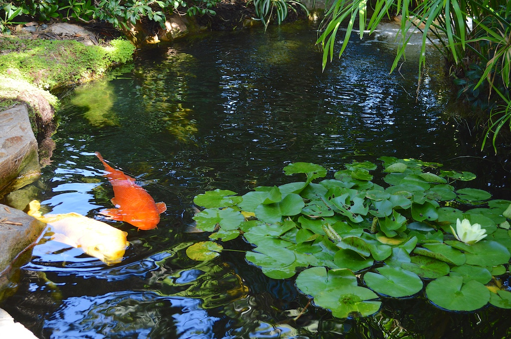 Self realization fellowship meditation gardens for Pond with plants
