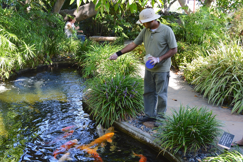 Self Realization Fellowship Meditation Gardens Koi Pond