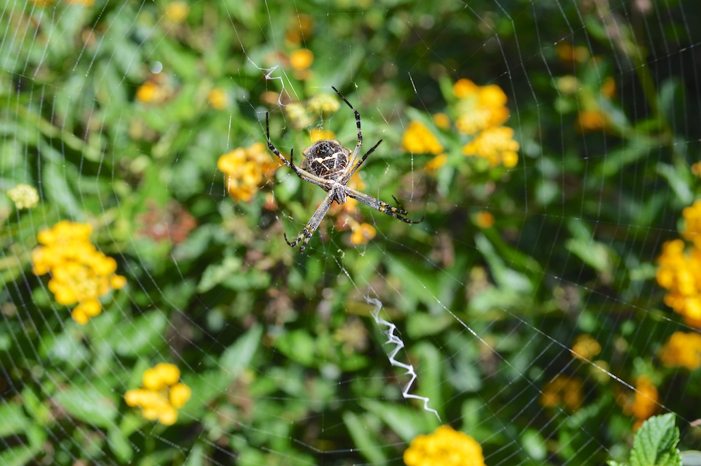 Self Realization Fellowship Meditation Gardens Spider