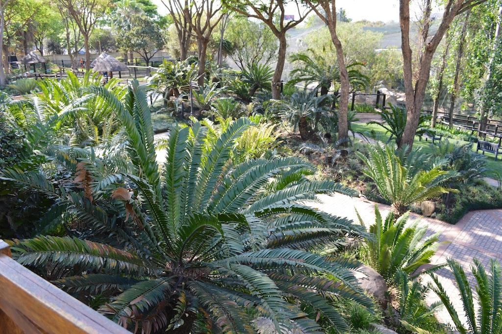Montecasino Bird Gardens Cycad Garden