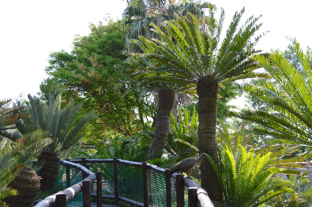 Montecasino Bird Gardens Encephalartos longifolius