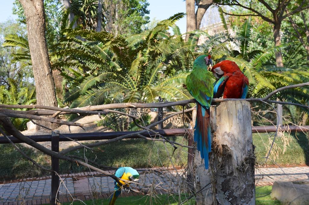 Montecasino Bird Gardens Parrots