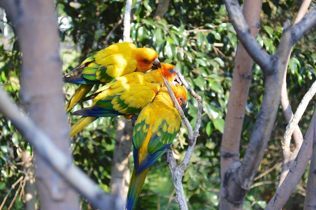 Montecasino Bird Gardens Unknown Bird