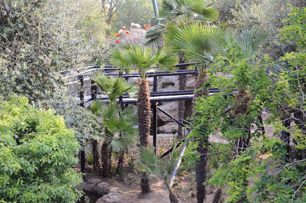 Montecasino Bird Gardens Trachycarpus fortunei