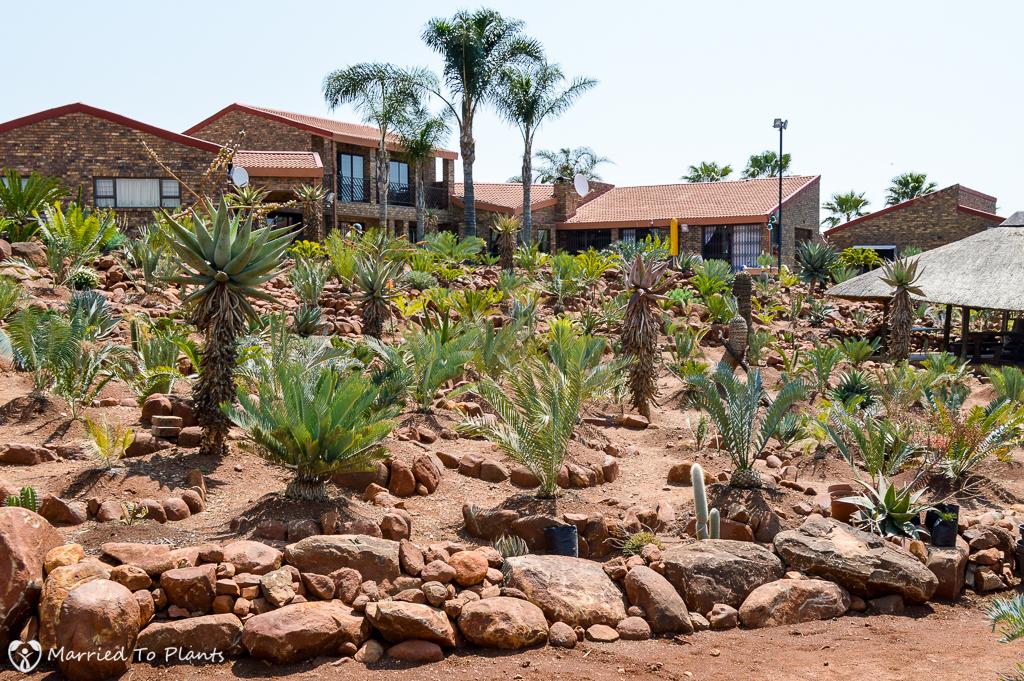 Encephalartos Garden