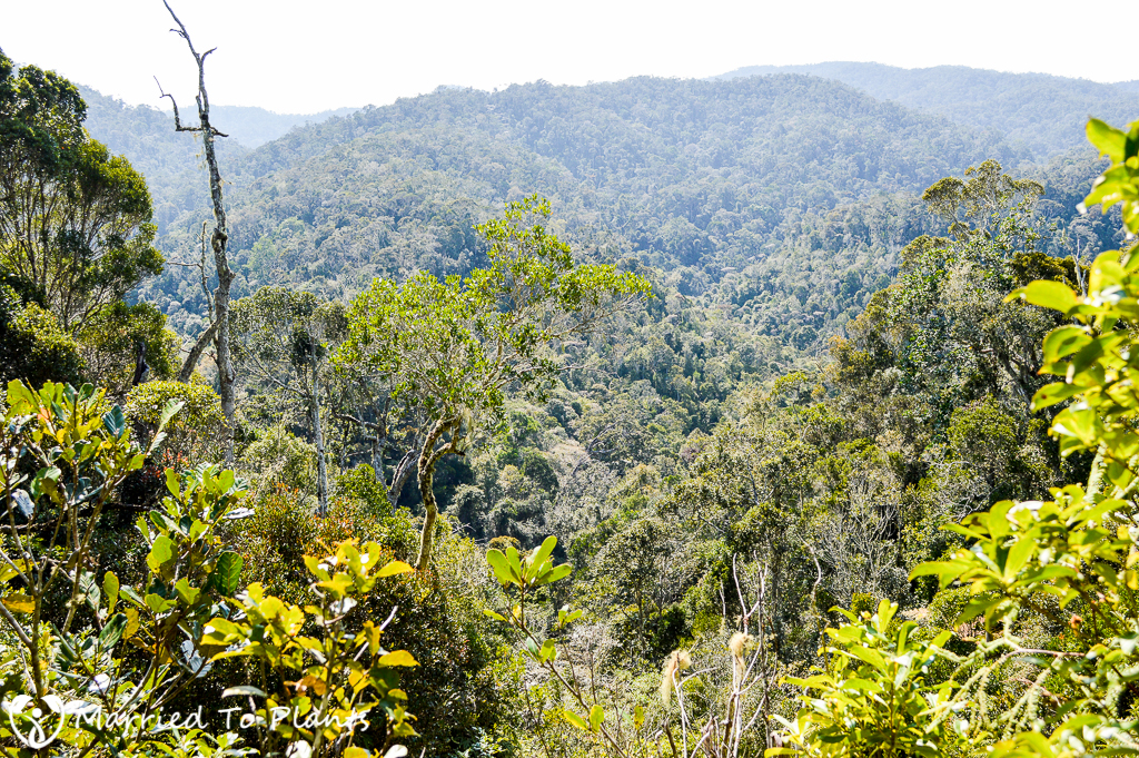 Mantadia National Park Circuit Trek View
