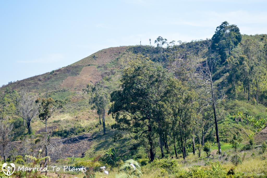 Mantadia National Park Deforestation