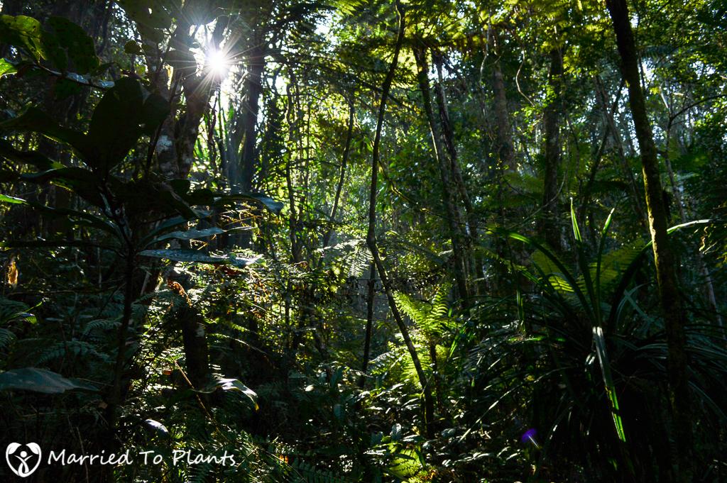 Mantadia National Park Rainforest