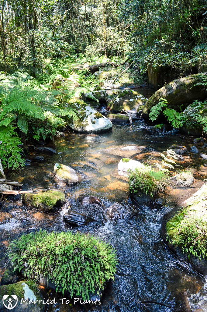 Stream at Mantadia National Park