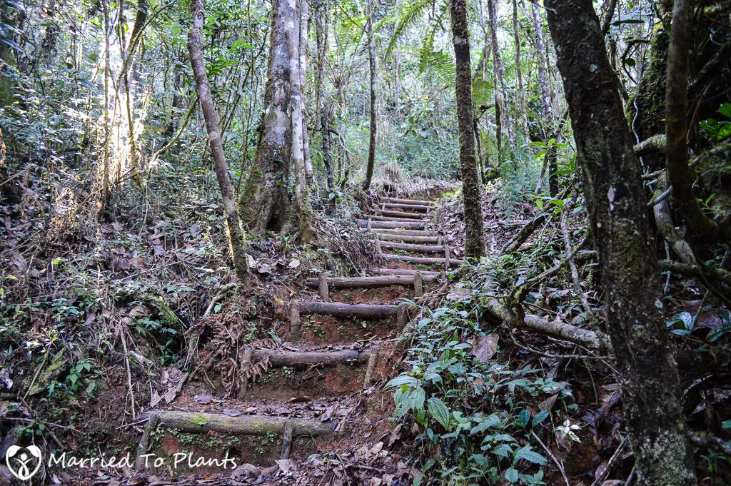 Mantadia National Park Trekking Trail