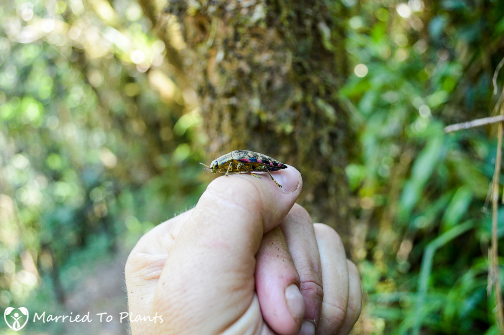 Unknown Beetle at Mantadia National Park