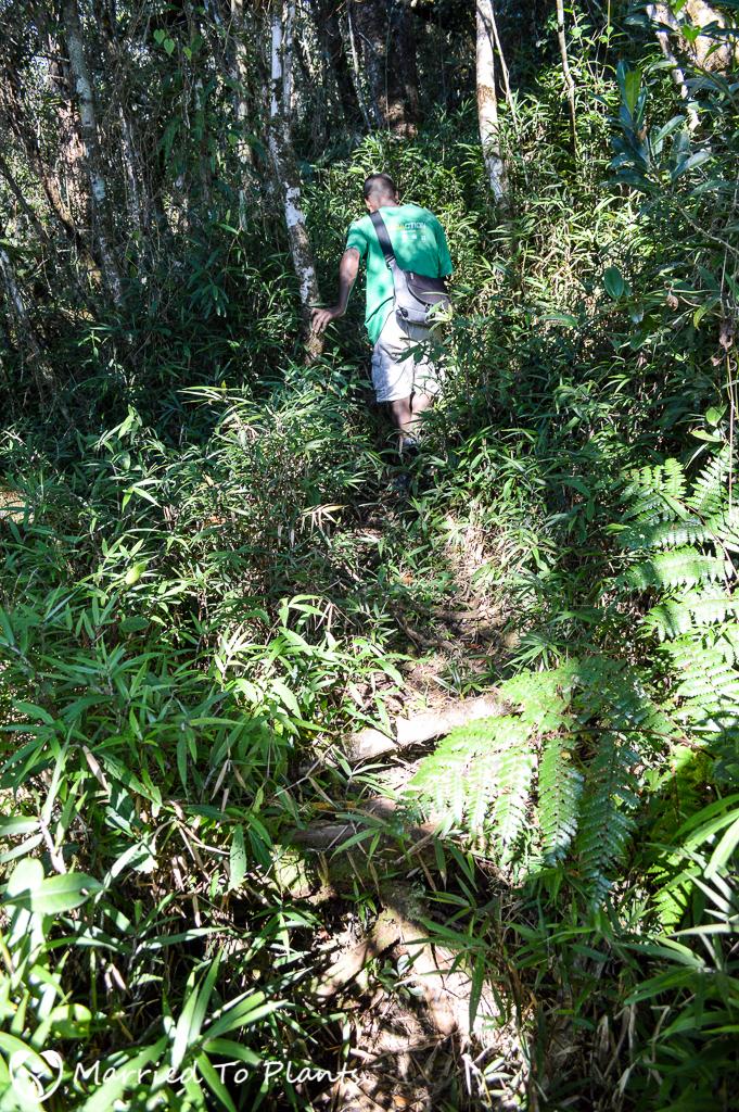 Maromizaha Forest Trail