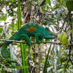 Maromizaha Reserve, Andasibe, Madagascar