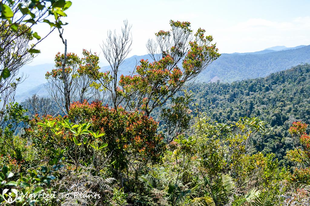 Maromizaha Reserve View