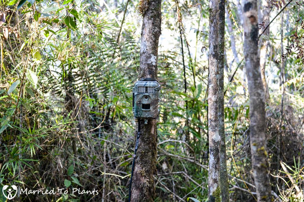Maromizaha Reserve Wildlife Camera Trap