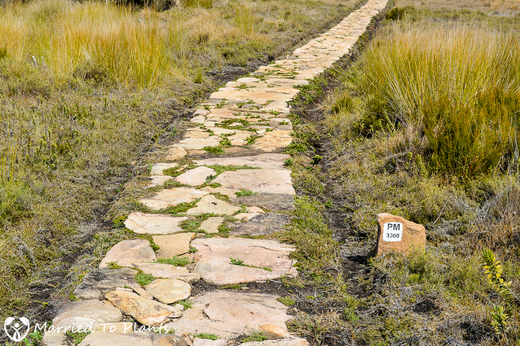 Andringitra National Park Rock Path