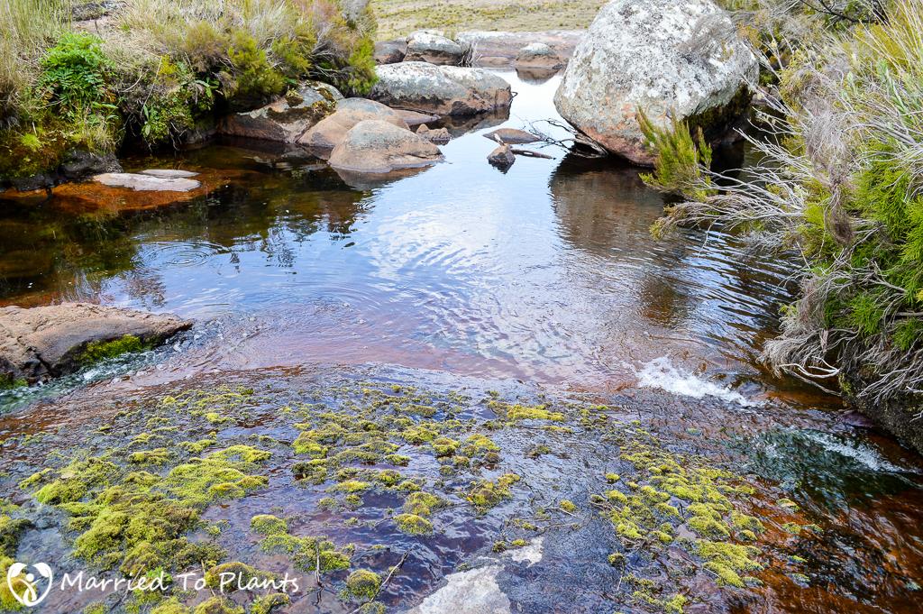 Andringitra National Park Stream