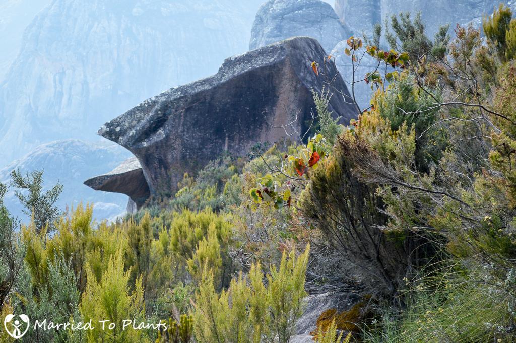 Bird Rock Peak Boby