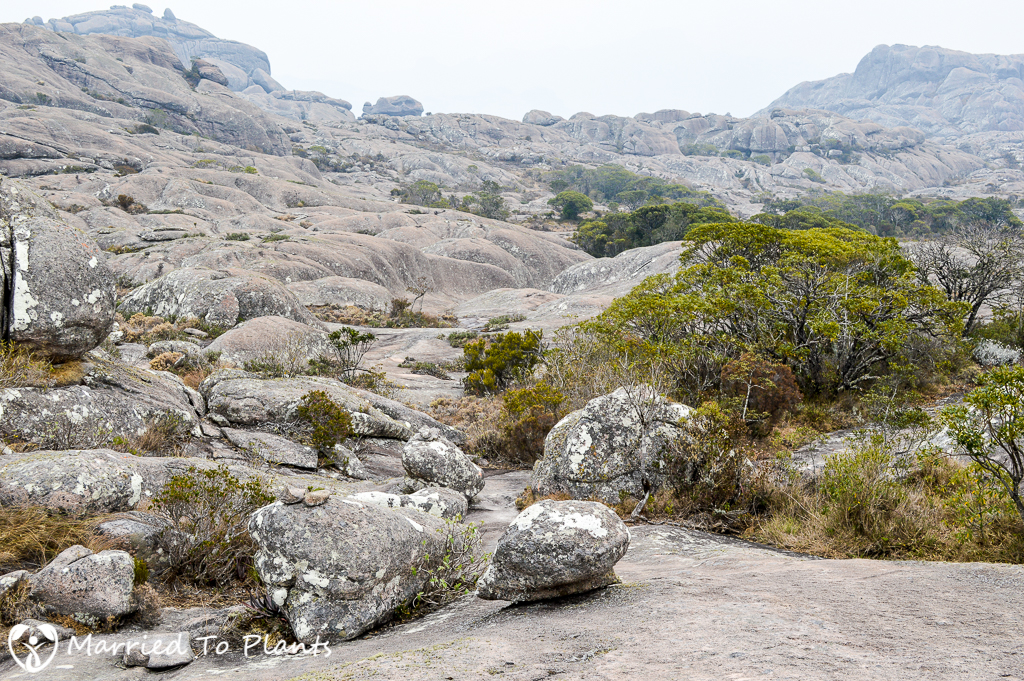 Andringitra Moon Landscape
