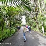 Mardy Darian Garden Estate Plant Sale