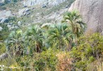 Camp Catta and Andringitra Mountains, Madagascar
