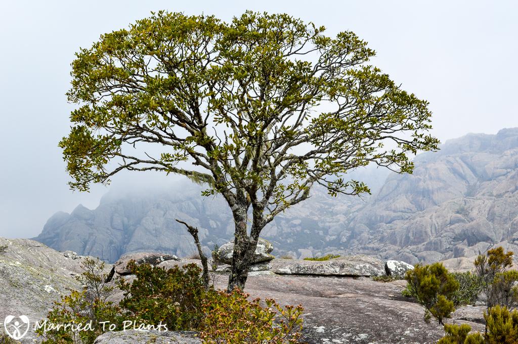 Tree in Andringitra Moon Landscape