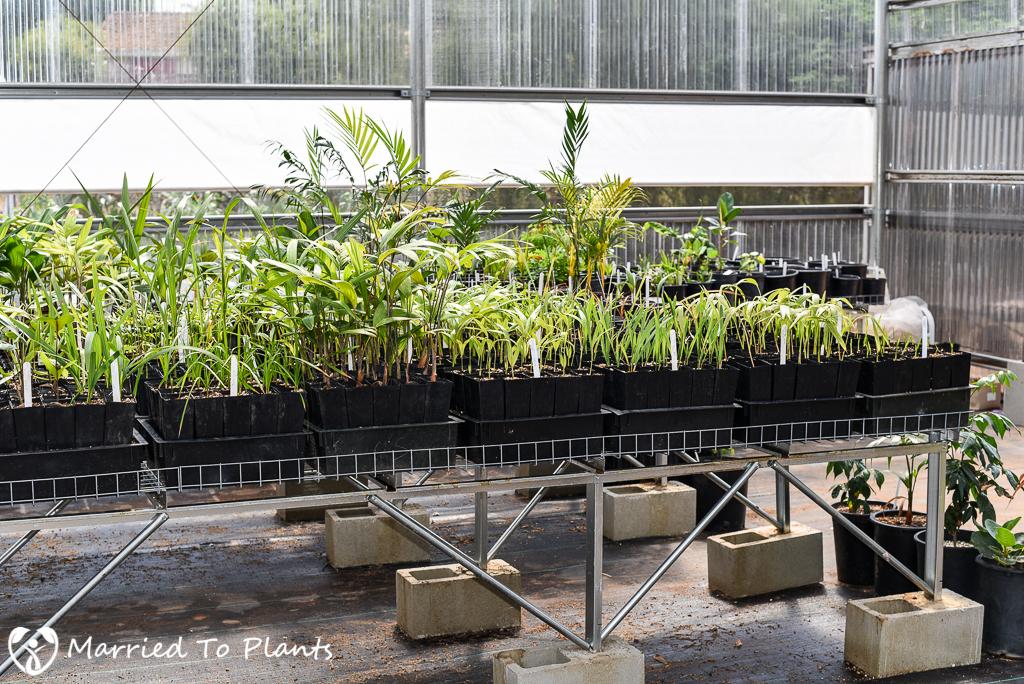 Josh Allen Greenhouse Marcus Plants