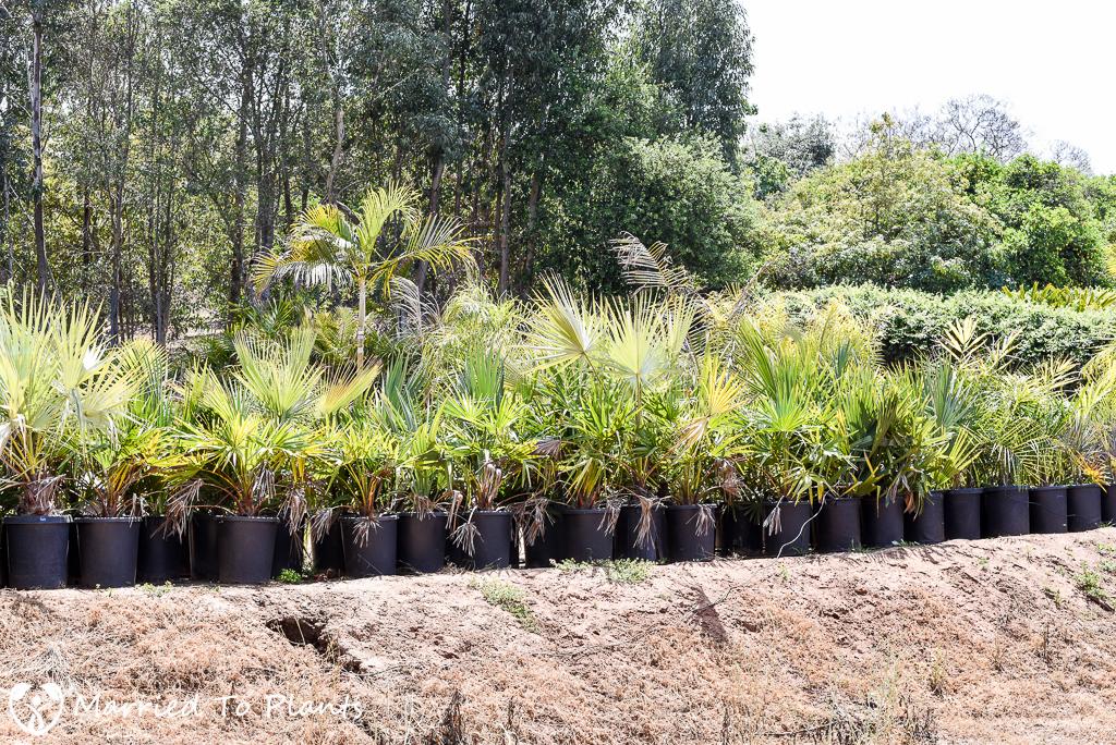 Josh Allen Nursery Palms
