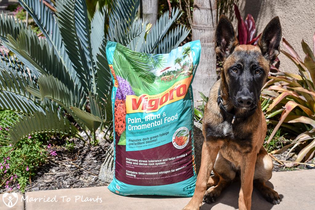 Spring Fertilizing Vigoro Palm Food