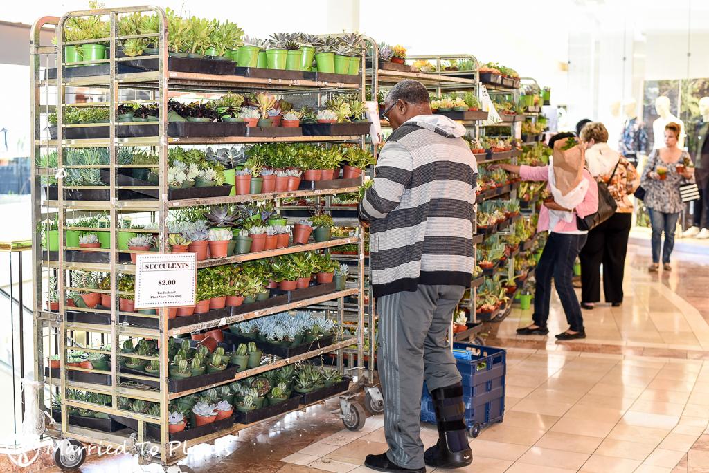 SC Spring Garden Show $2 Succulents