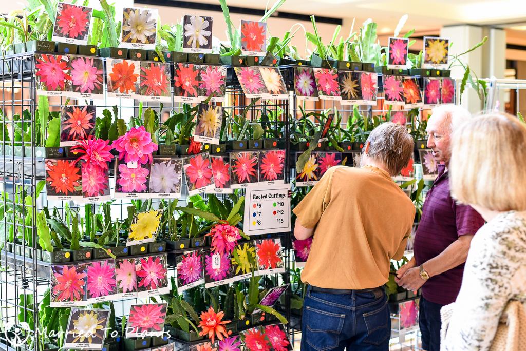 SC Spring Garden Show Epiphyllum Society of America