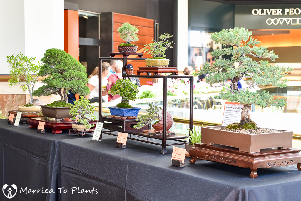 SC Spring Garden Show Orange Empire Bonsai Society