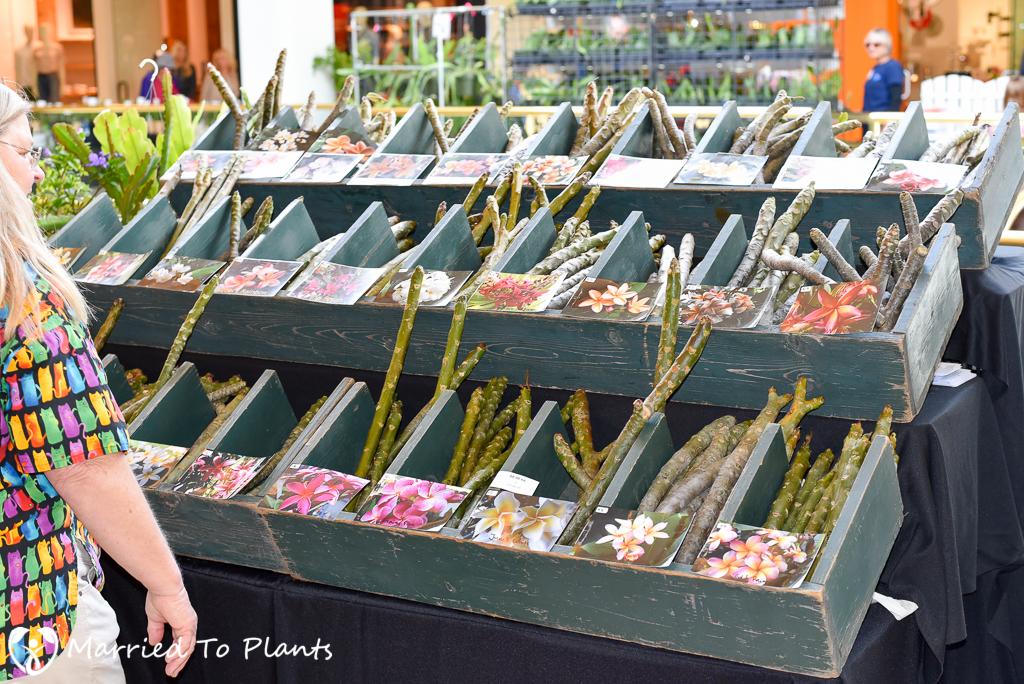 SC Spring Garden Show Myuhka's Plumerias