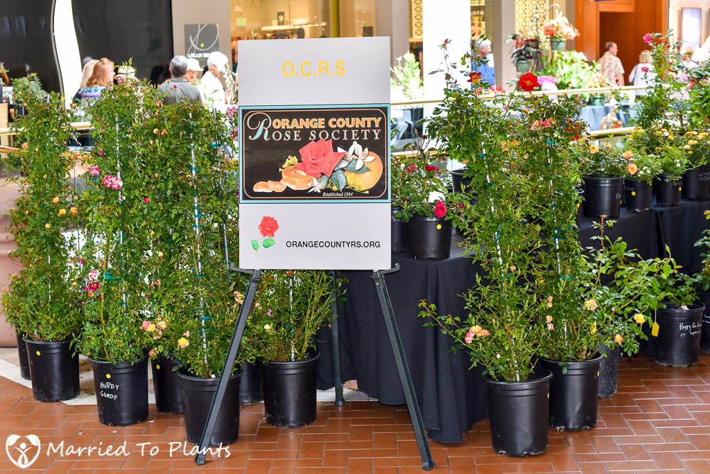 SC Spring Garden Show Orange County Rose Society