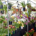 Southern California Spring Garden Show: At Home in The Garden