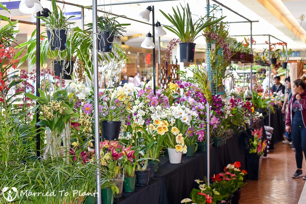 SC Spring Garden Show Orchids