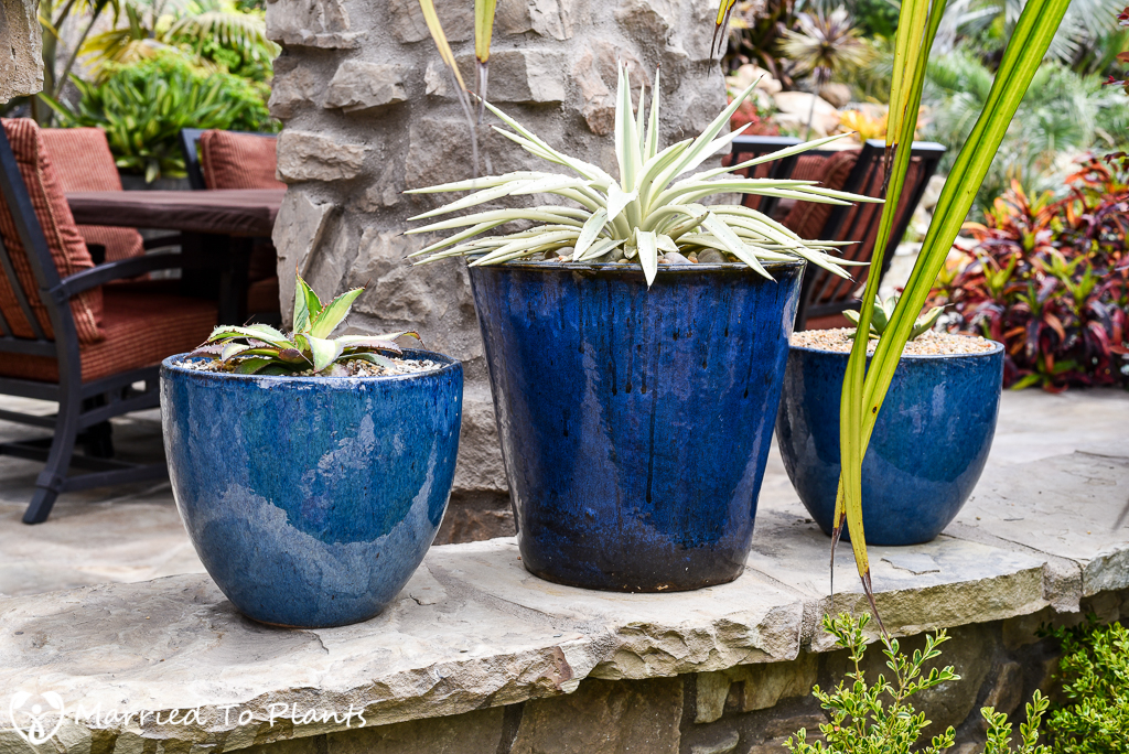 Black and Blue Ceramic Pots