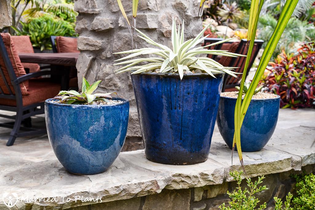 Black and Blue Ceramic Pots