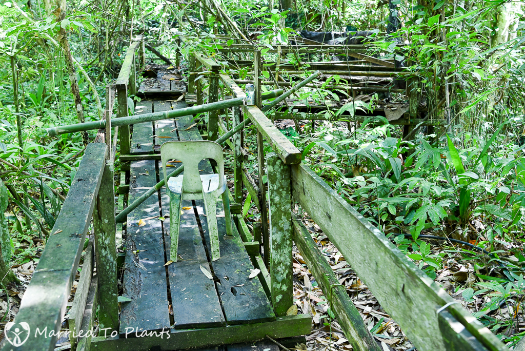 Adenna Rafflesia Garden Viewing Decks