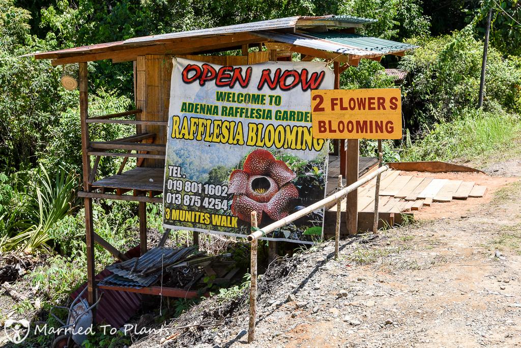 Adenna Rafflesia Garden