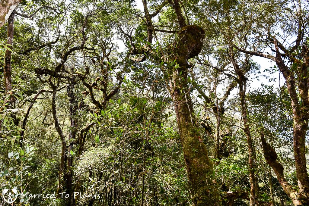 Mount Kinabalu Canopy