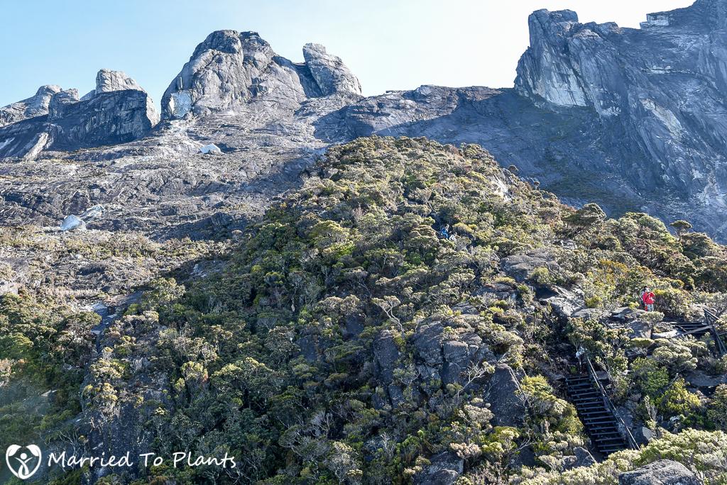 Mount Kinabalu Treeline