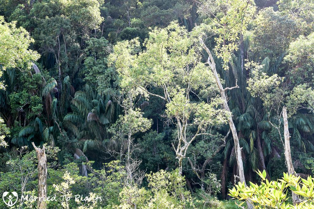 Bako National Park Oncosperma tigillarium