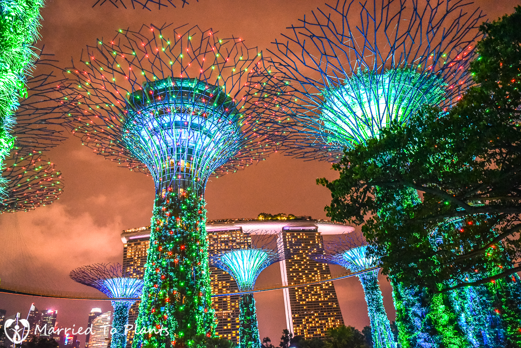 Gardens by the Bay Super Trees at Night