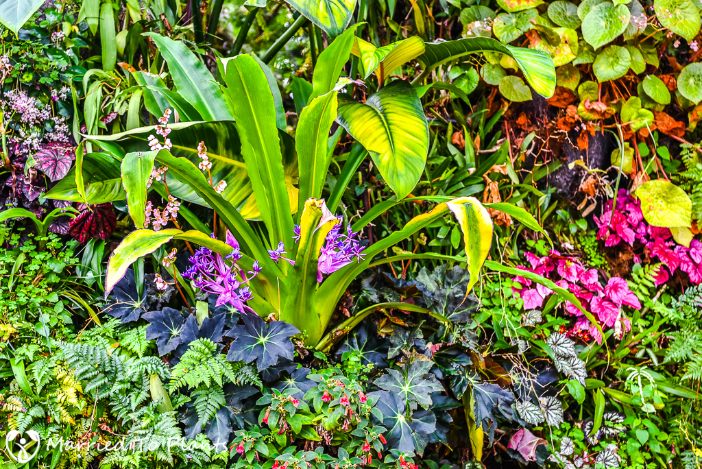 Gardens by the Bay Cloud Forest Cochliostema odoratissima