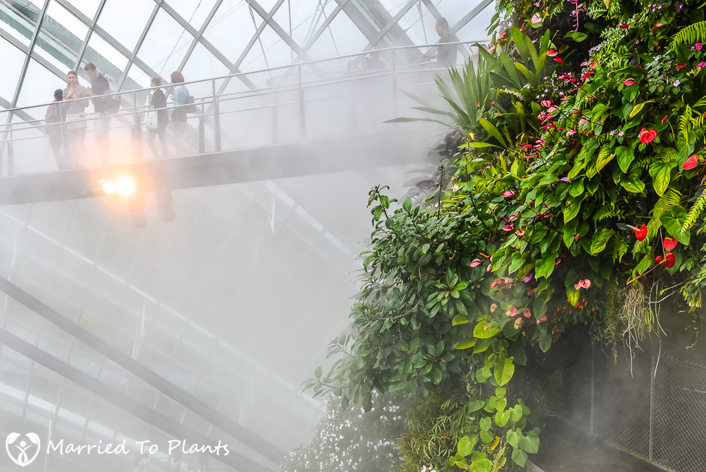 Gardens by the Bay Cloud Forest Misting