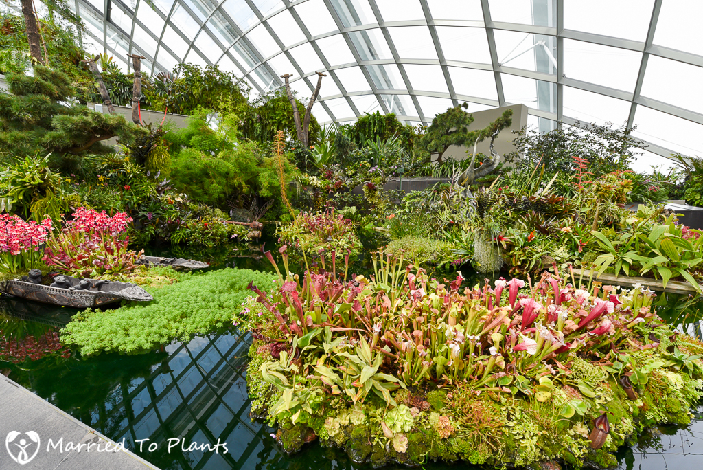 Gardens by the Bay Cloud Forest Nepenthes Display